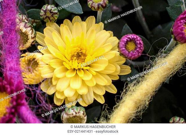 Chrysanthemen als Dekoration