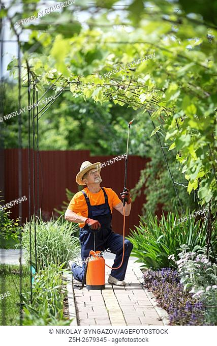 Russia. Belgorod region. Elderly man working in the garden. Processing of trees from pests