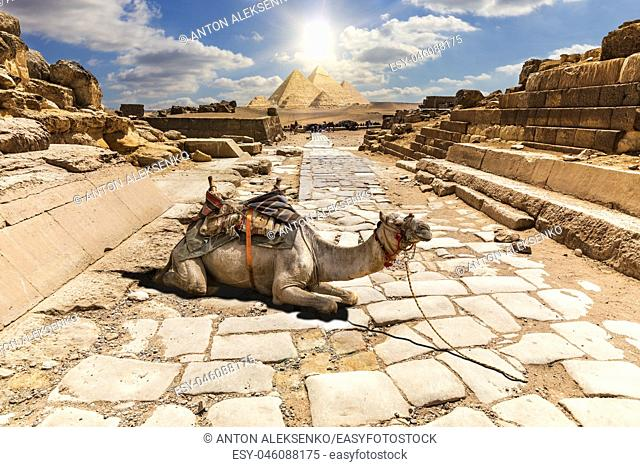 A camel in the ruins of Giza temple, Egypt