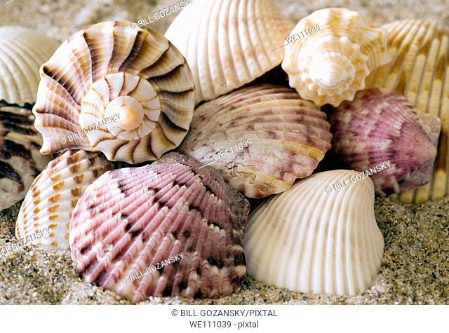 Seashells - Florida, USA