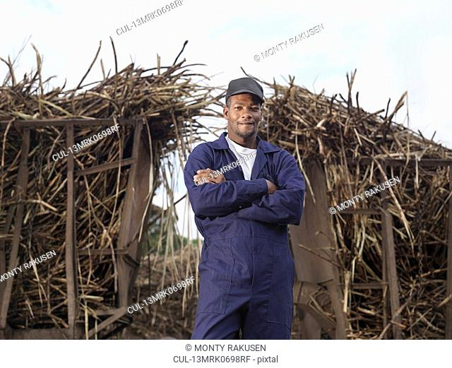 Worker In Front Of Harvested Sugar Cane