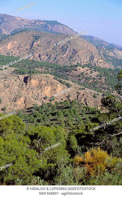 Sierra de Espuña Natural Park. Murcia province. Spain