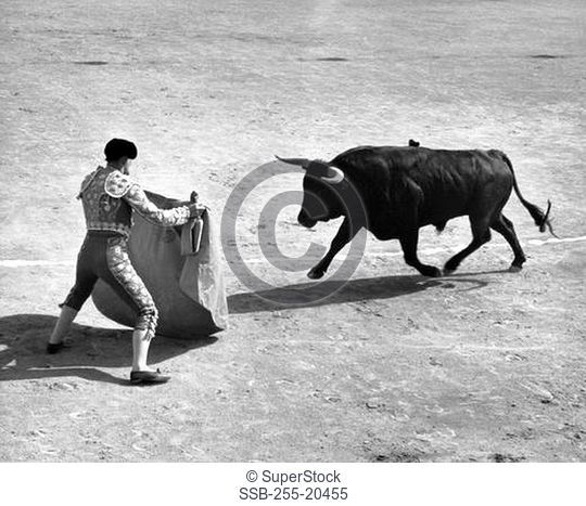 Rear view of a bullfighter fighting with a bull