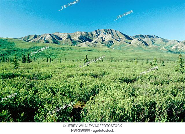 Scenic view. Denali National Park. Alaska. USA