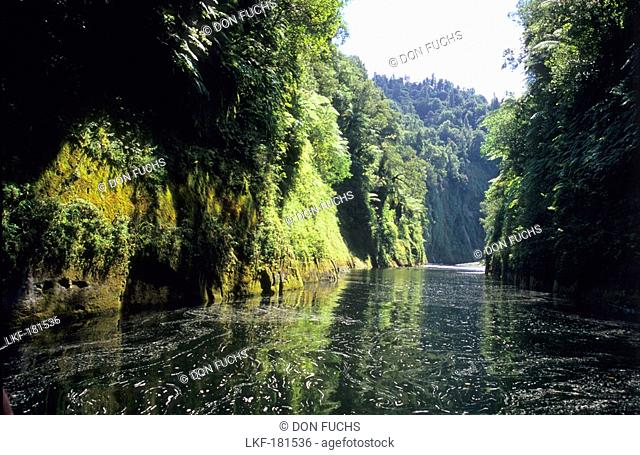 The Wanganui River in Whanganui National Park, North Island, New Zealand