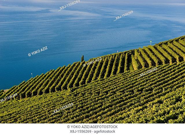 Lavaux vineyards, UNESCO, Switzerland