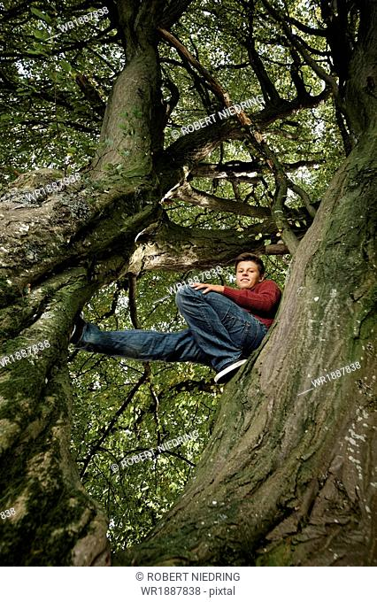 Teenage boy climbing tree, Bavaria, Germany, Europe