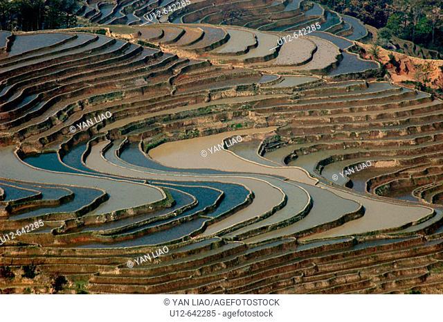 Rice fields. Yunnan. Yuanyang. China