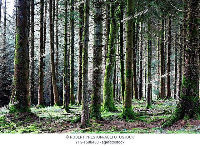 A wood in Devon, England