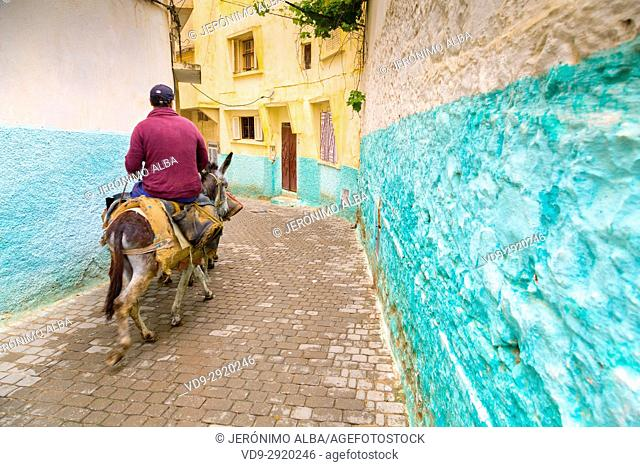 Man riding a donkey, Street life scene, Moulay Idriss. Morocco, Maghreb North Africa