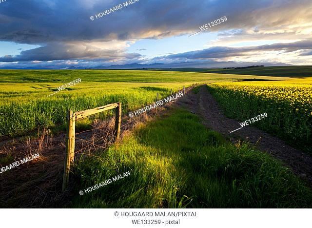 Landscape photo of cloudy conditions over a pretty farm landscape. Overberg, Western Cape, South Africa