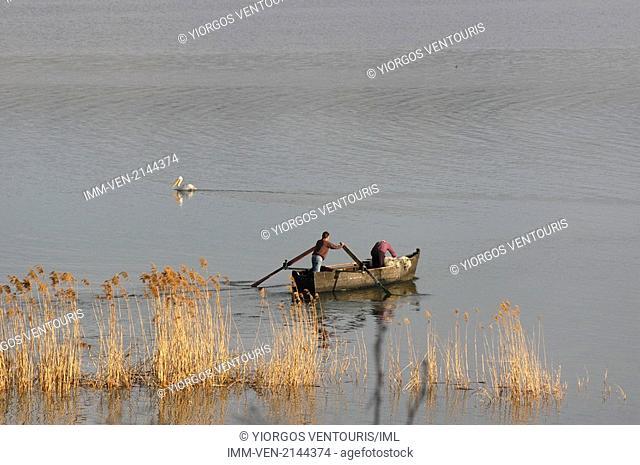 Fishermen rowing and a pelican swimming in Lake Vegoritida that sits between the prefectures of Pella and Florina. Vegoritida Lake, Pella, Central Macedonia