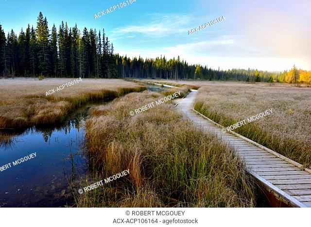 A morning landscape image with the first frost of autumn laying heavy on the grasses at the beaver board walk in Hinton, Alberta, Canada