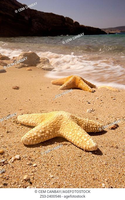 Starfish on the beach, Koufonissi, Cyclades Islands, Greek Islands, Greece, Greece, Europe