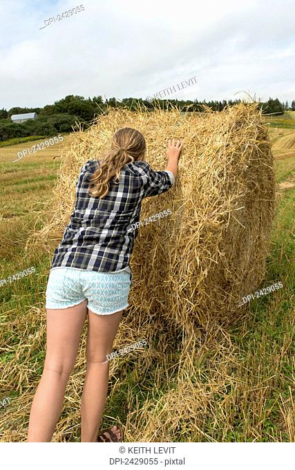 A teenage girl pushes a large hay bale in a farm field; Kensington, Prince Edward Island, Canada