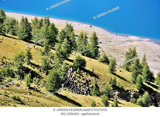 Pastoral landscape at the mountain lake Lac d`Allos, Alpes-de-Haute-Provence, French Alps, France