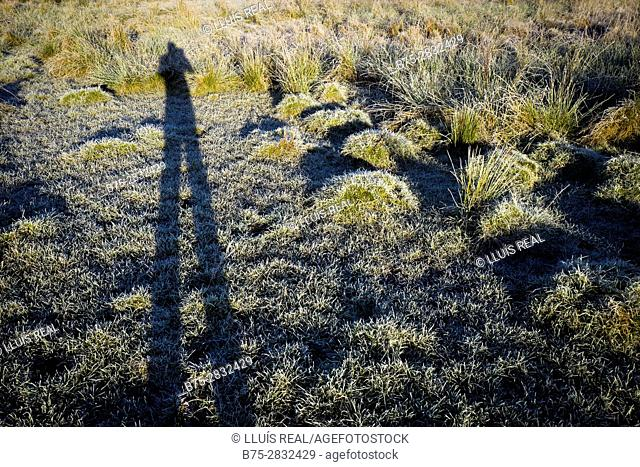 Shadow of photographer taking a photo of rushes and grass soil on a cold and frosty morning of a rural landscape. Buckden, Skipton, North Yorkshire, England, UK