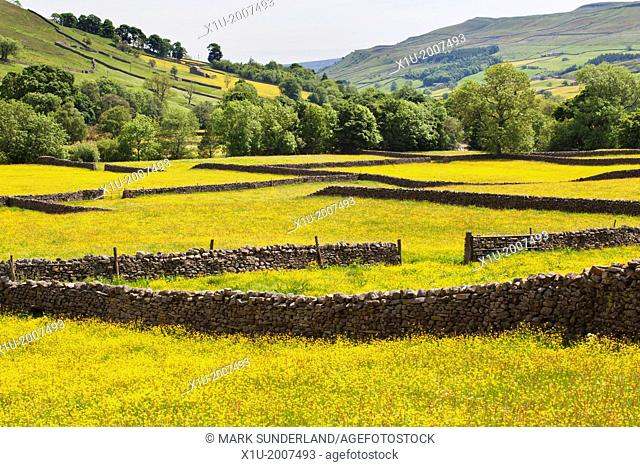Dry Stone Walls and Buttercup Meadows at Muker Swaledale Yorkshire Dales England