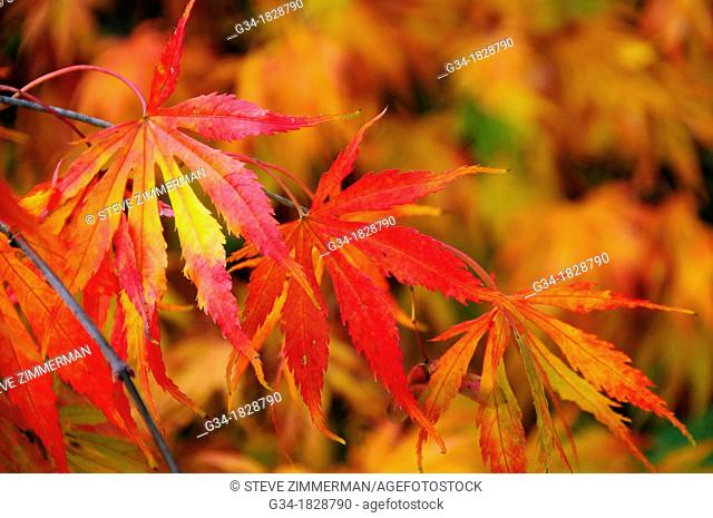 Kubota Fall 1