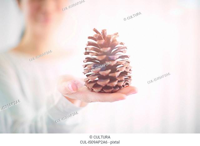 Shallow focus close up of pine cone on womans palm