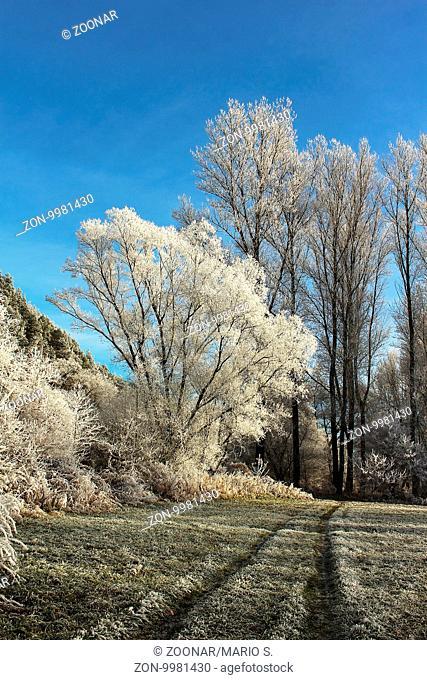 gefrorene Bäume