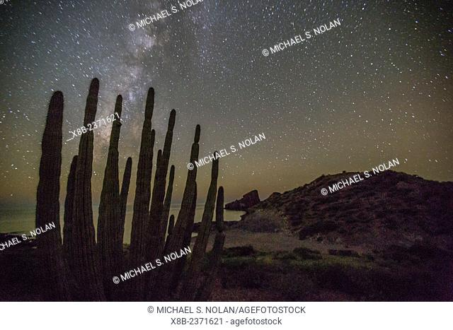 Night view of the Milky Way with organ pipe cactus, Stenocereus thurberi, in foreground, Himalaya Beach, Sonora, Mexico