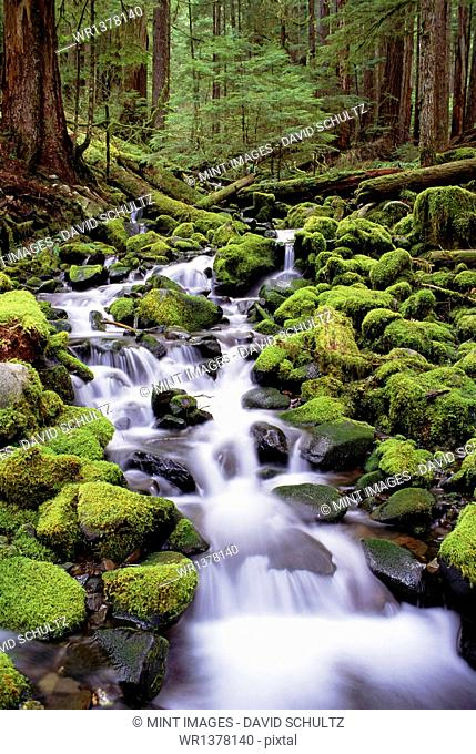 A stream flowing over moss covered rocks in the Olympic National Park, in Washington State