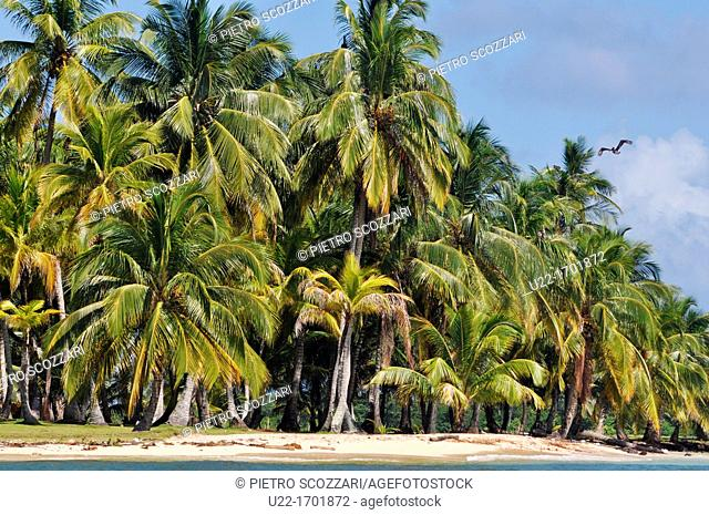 San Blás Panama: palm trees of Diadup, little island of Kuna Yala