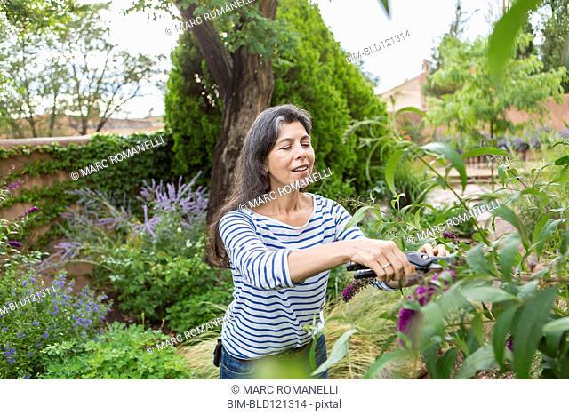 Hispanic woman pruning flowers in garden