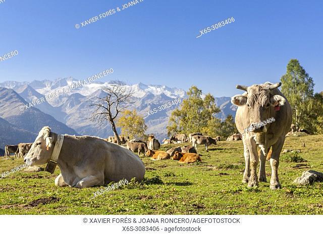 Varradòs valley, Val d'Aran, Lleida, Spain