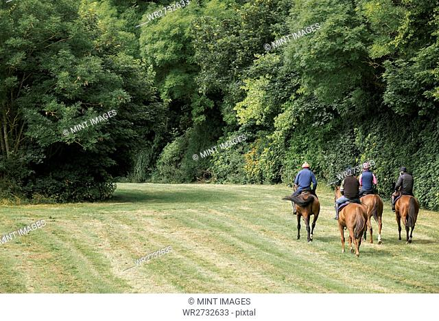 A string or group of riders on thoroughbred horses riding along a path. Racehorses in training. Routine exercise