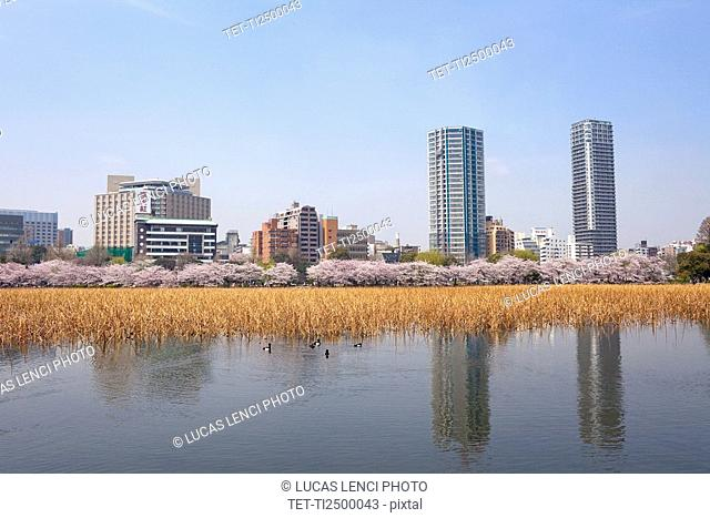 Pond with buildings in background