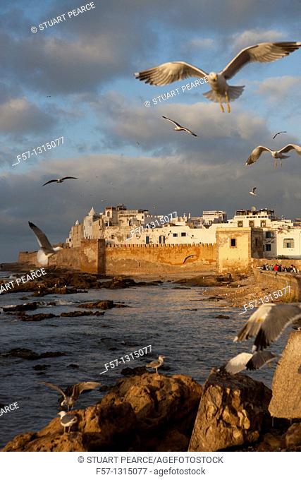 Seagulls, Essaouira, Morocco