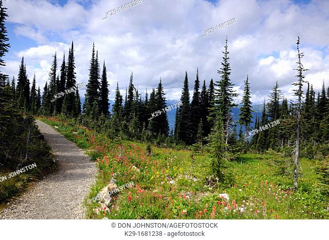 Alpine meadows with pathways, fir trees and wildflowers, Mount Revelstoke National Park, British Columbia, Canada