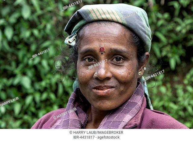 Native woman, tea picker, near Nuwara Eliya, Central Province, Sri Lanka
