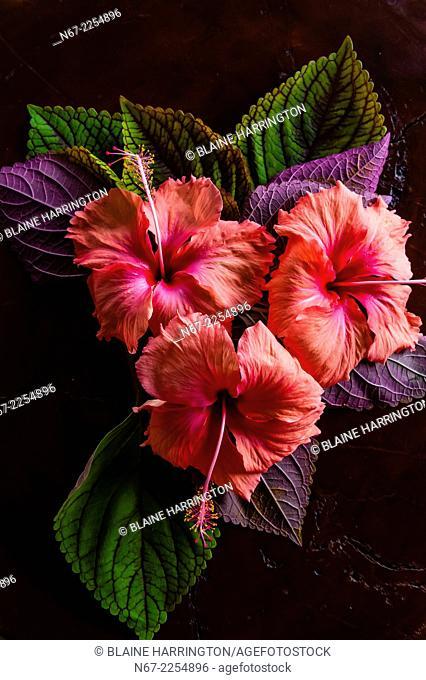 Tropical flowers, Four Seasons Resort Bora Bora, French Polynesia