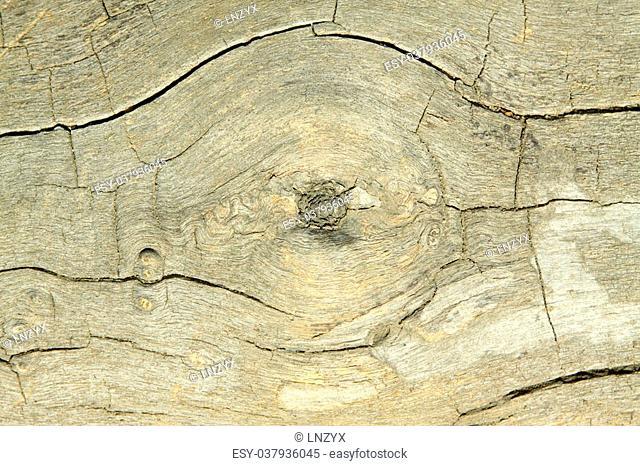 closeup of wood texture, brown wallpaper