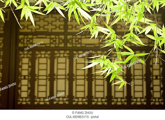Bamboo leaves and asian style window, Wang jiang lou park, Chengdu, Sichuan, China