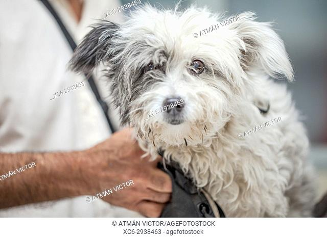 dog at the vet's undergoing a medical check