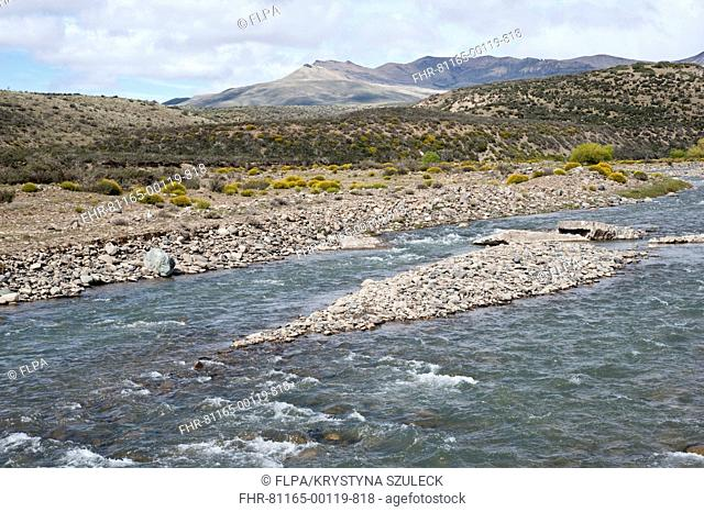 View of river with flowering Adesmia boronioides and Junellia tredens shrubs on shore, Centinela River, El Calafate, Santa Cruz Province, Patagonia, Argentina