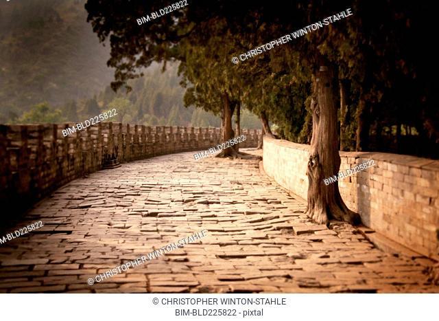 Tree-lined cobblestone path