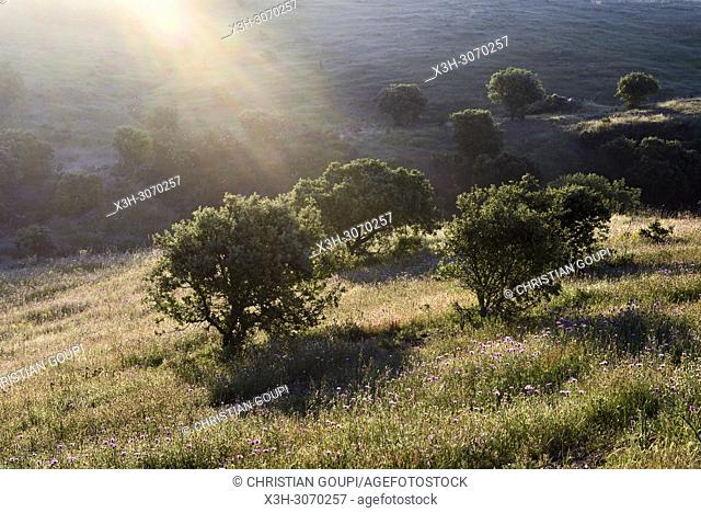 countryside near the village of Quintao, Municipality of Mertola, Alentejo region, Portugal, southwertern Europe