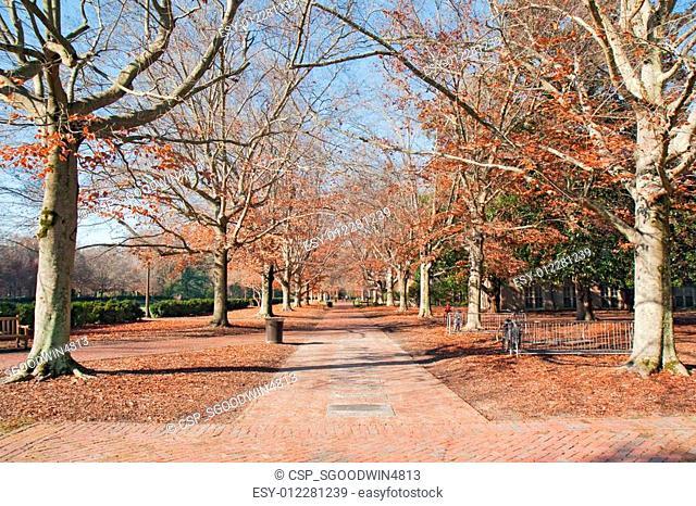 Brick walkway in autumn