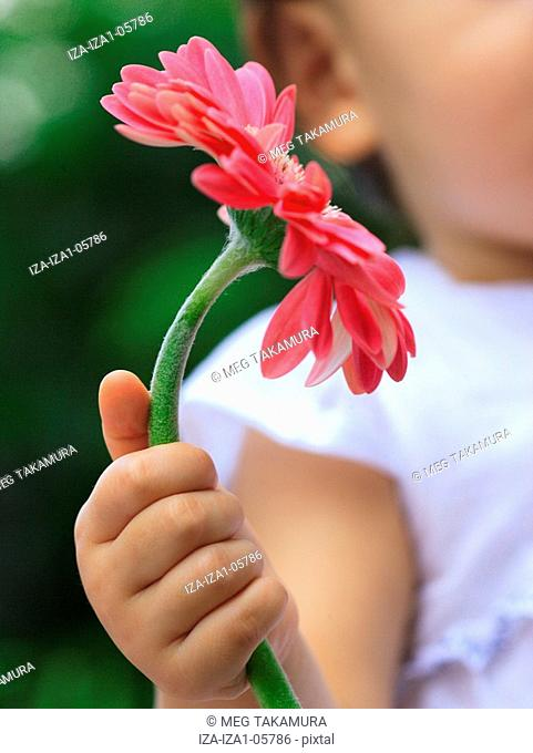 Close-up of a baby girl holding a gerbera daisy