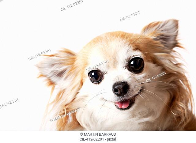 Close up of dog's face