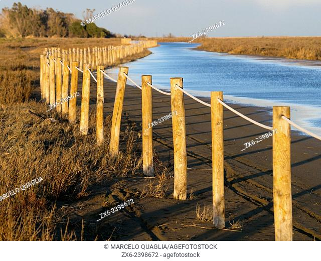 Wooden pole fence for nidification protected area at flooded Eucalyptus beach. Ebro River Delta Natural Park, Tarragona province, Catalonia, Spain