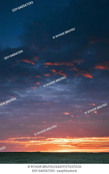 Landscape Of Green Young Oat Plantation In Spring Field Under Scenic Summer Colorful Sky At Sunset Or Sunrise Dawn. Agricultural Rural Landscape