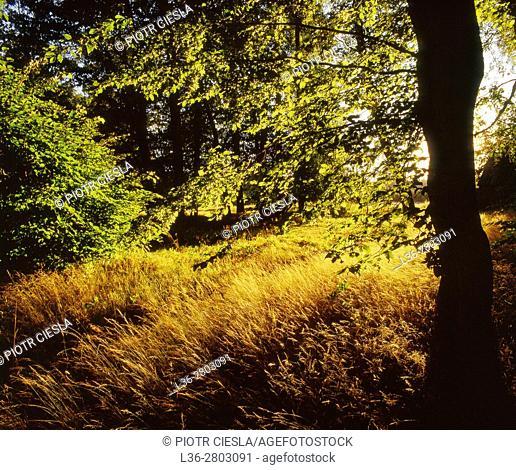 Poland. Mazowsze region. Meadow and wood