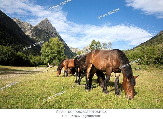 Wild horses grazing along the GR 11 near the village of Espot - Aigüestortes i Estany de Sant Maurici National Park, Lleida, Cataolina, Spain