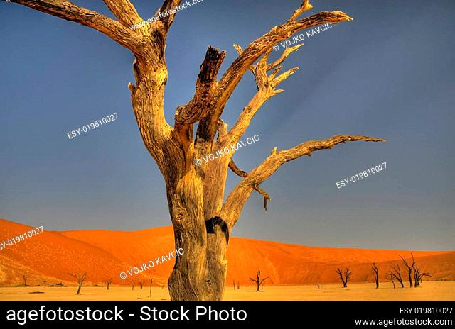 Tote Bäume in der Namib